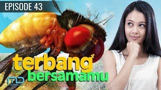 Video Terbang Bersamamu - Episode 43 download MP3, 3GP, MP4, WEBM, AVI, FLV September 2019