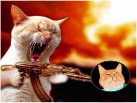 taz the cat vs keyboard cat