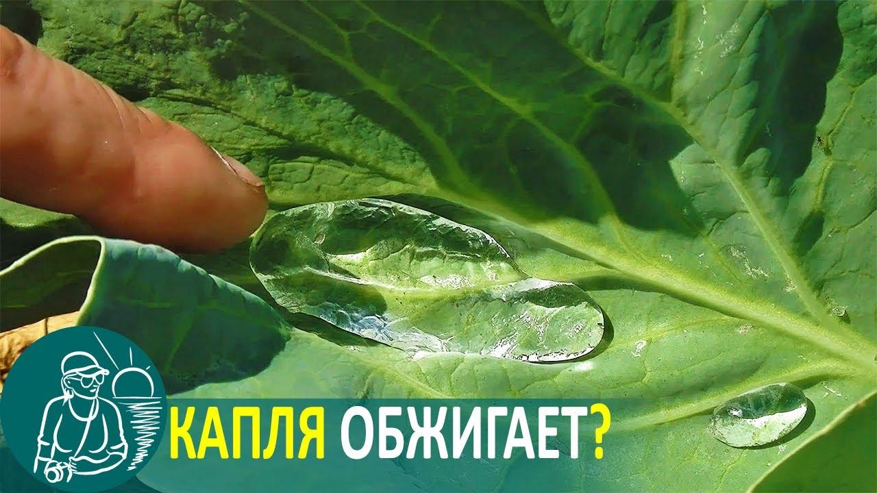 Полив огорода: миф о каплях-линзах 💧 Эксперимент Гордеевых