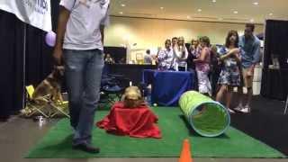 Orlando Home Show Small Dog Training