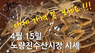 [최신시세정보]갑오징어가 나오기 시작했어요 ~그리고 대…