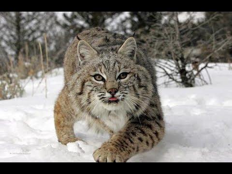 Дикие Животные Севера | Документальный Фильм - Видео онлайн