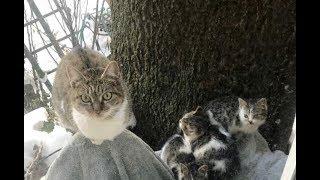 Выглянув в окно, девушка увидела замерзшую кошку с тремя котятами