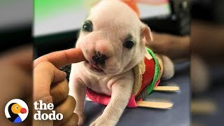 Watch This Teeny Tiny Wobbly Puppy Take Off Running | The Dodo