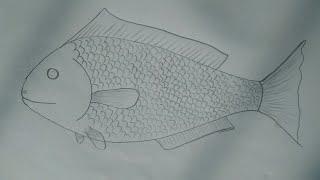 របៀបគូររូបត្រីងាយៗ-How to draw fish.