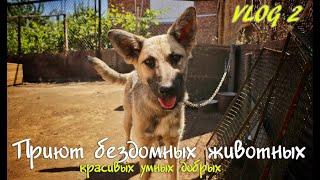 VLOG 2. Приют бездомных животных. Уральск
