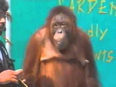 прикол с обезьяной