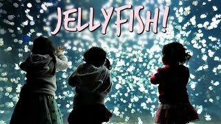 THOUSANDS OF JELLYFISH! - April 23, 2017 - ItsJudysLife Vlogs