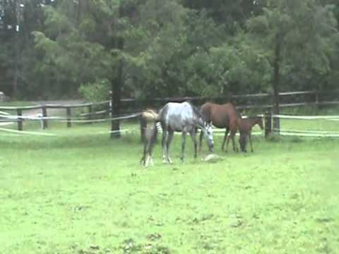 Boston Equestrian Center's offspring
