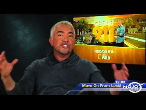 Cesar Millan Explains Best Way to Train a Dog