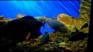 видео Лимнологический музей. Открытие аквариума