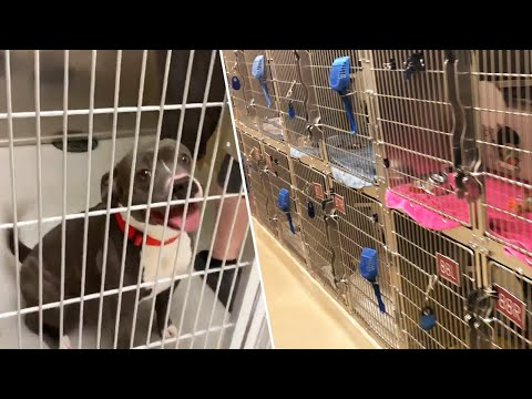 How Shelter Found Homes For Every Animal Ahead Of Lockdown