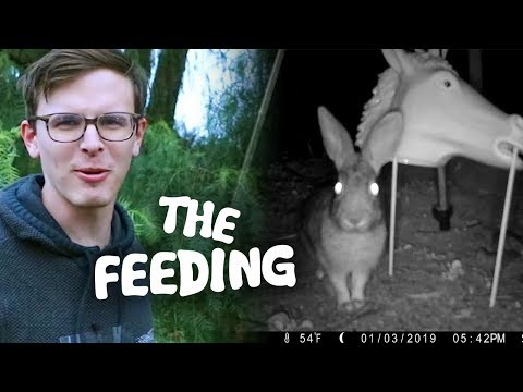 Feeding CREEPY Rabbits - Save the Squirrels Initiative