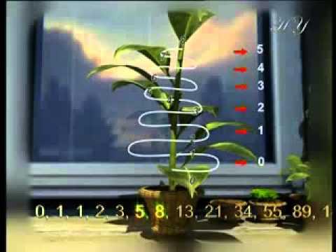 Fibonacci Numbers and the Golden Ratio 1 618