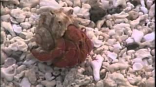 VK9ZM/VK9ZW Mellish Reef 0104