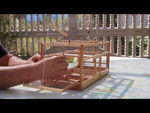 Как сделать западок для ловли птиц