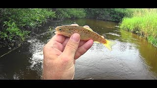 Wisconsin Trout Fishing - 7/17/2019