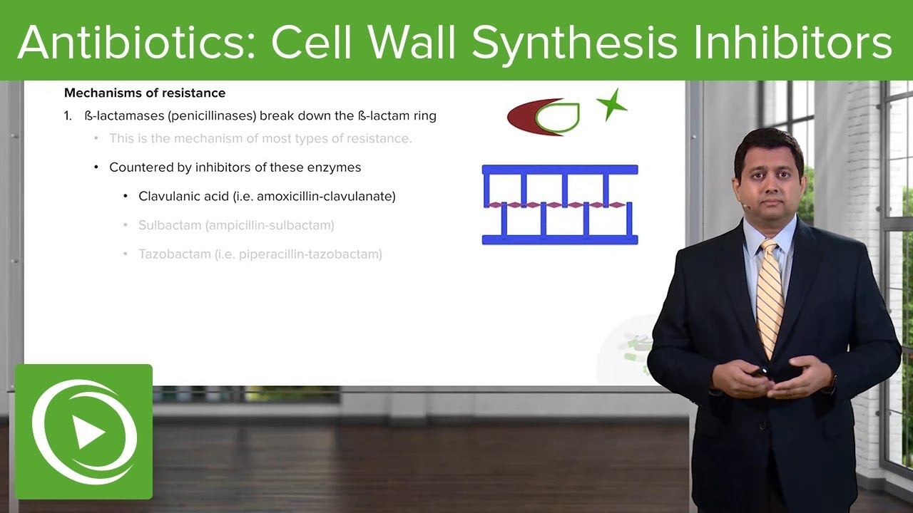 Antibiotics: Cell Wall Synthesis Inhibitors – Pharmacology | Lecturio