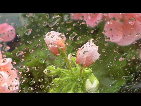 Влажность воздуха для растений – какой должна быть на самом деле???