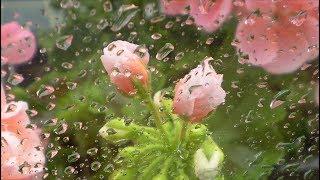 влажность воздуха для растений  какой должна быть на самом деле???