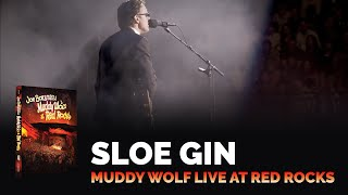 "Joe Bonamassa - ""Sloe Gin"" - Muddy Wolf at Red Rocks"