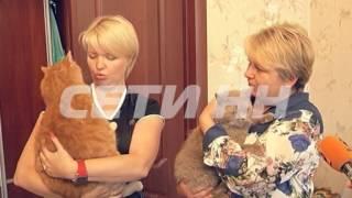 14 кг чистого веса - самый большой кот Нижнего Новгорода поселился в Сормовско районе