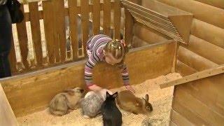 Фото ❦ ТРК ЛЕТО в Санкт Петербурге. Трогательный зоопарк.