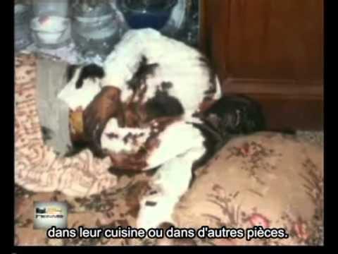 Falloujah Le Massacre Caché VO ST francais