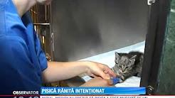 Un pui de pisică împuşcat intenţionat în cap a fost salvat de un tânar