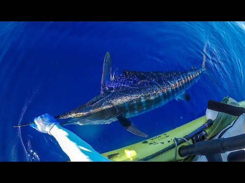 My First Striped Marlin In 3,000 Ft!