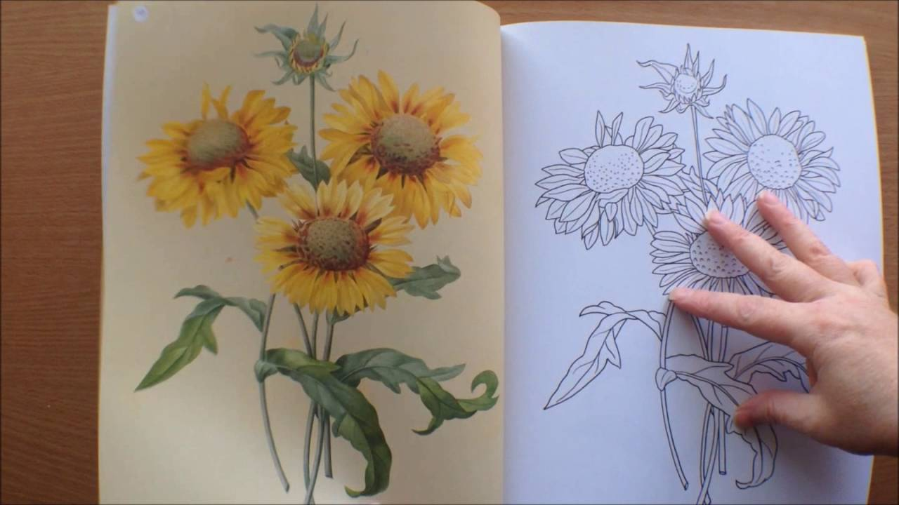 Colouring Flowers Book With Pictures By Redoute