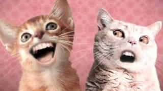 Animated Spoof Music Video: Numa Cat