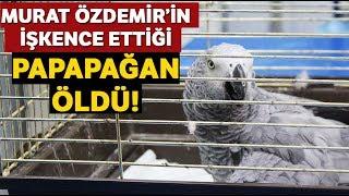 Murat Özdemir 39 in İşkence Ettiği Papağan Öldü