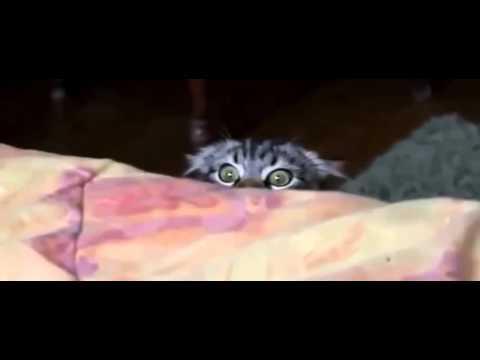 Кошка смотрит фильм ужасов  Прикол!
