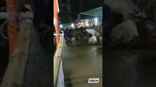পাগলা গরু ছুইটা গেসে    Ambaghicha Haatt 2020