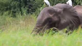 Meeting An Elephant While Canoeing On The Zambezi River