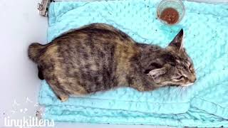 Feral cat Naya gives birth for the last time!