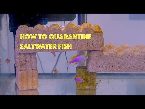How-to Quarantine Tank For Saltwater Fish