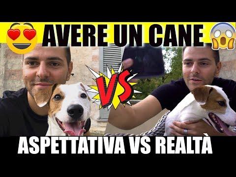 AVERE UN CANE - Aspettativa VS Realtà - iPantellas