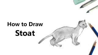 How to Draw a Short-Tailed Weasel with Pencils [Time Lapse]