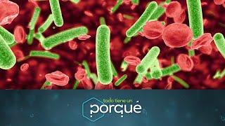 Los microorganismos - Todo tiene un porqué