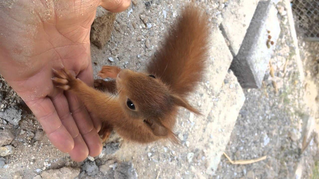 Baby Eichhörnchen Baby - YouTube