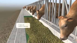 Feedstar - Das automatische Fütterungssystem von EDER Tuntenhausen