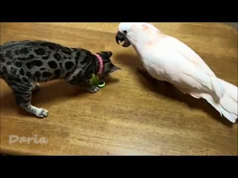 Смешные попугаи! Весёлые моменты! ПРИКОЛЫ! #3