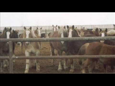 *Horse Auctions-The sad truth*