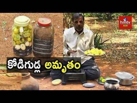 Kodigudla Amrutham (Egg Amino Acid) Preparation   Natural Farming   hmtv Agri