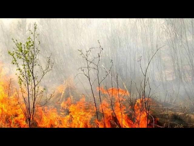 Изображение предпросмотра прочтения – ДмитрийСуевалов читает произведение «Пожары» Ф.И.Тютчева