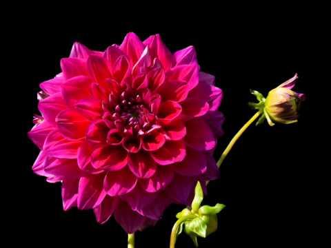 Flores Fondo Negro 14 Marcos Ferrera Youtube