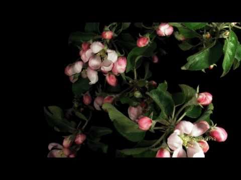 Marion Meadows  ~ Under The Shade Tree. (HD)