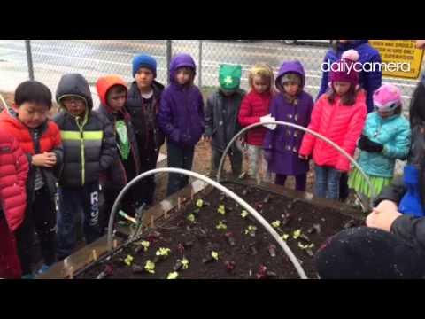 Garden to table at Whittier International Elementary #bvsd